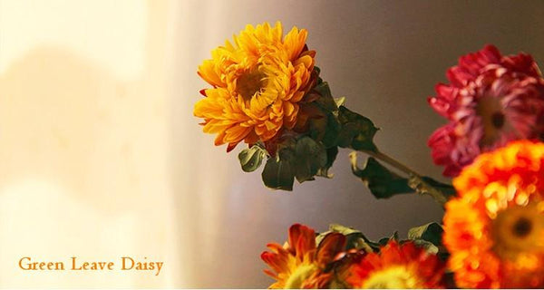 A Bunch Dried Daisy Flowers, Natural Dried Flower Arrangements, Dried Floral, Bulk Flowers