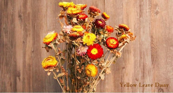 A Bunch Dried Daisy Flowers, Natural Dried Flower Arrangements, Dried Floral, Bulk Flowers - Art Painting Canvas