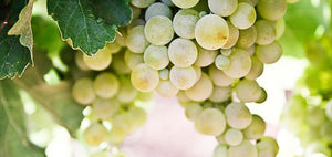 Five reasons to look forward to the 2012 vintage