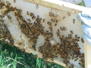 Know when to take honey from your hive