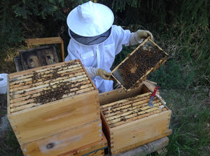 Splitting an overwintered hive: How to do it