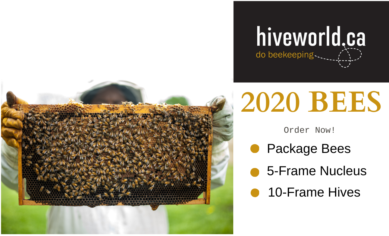 What Bees Should You Buy For the 2020 Season?