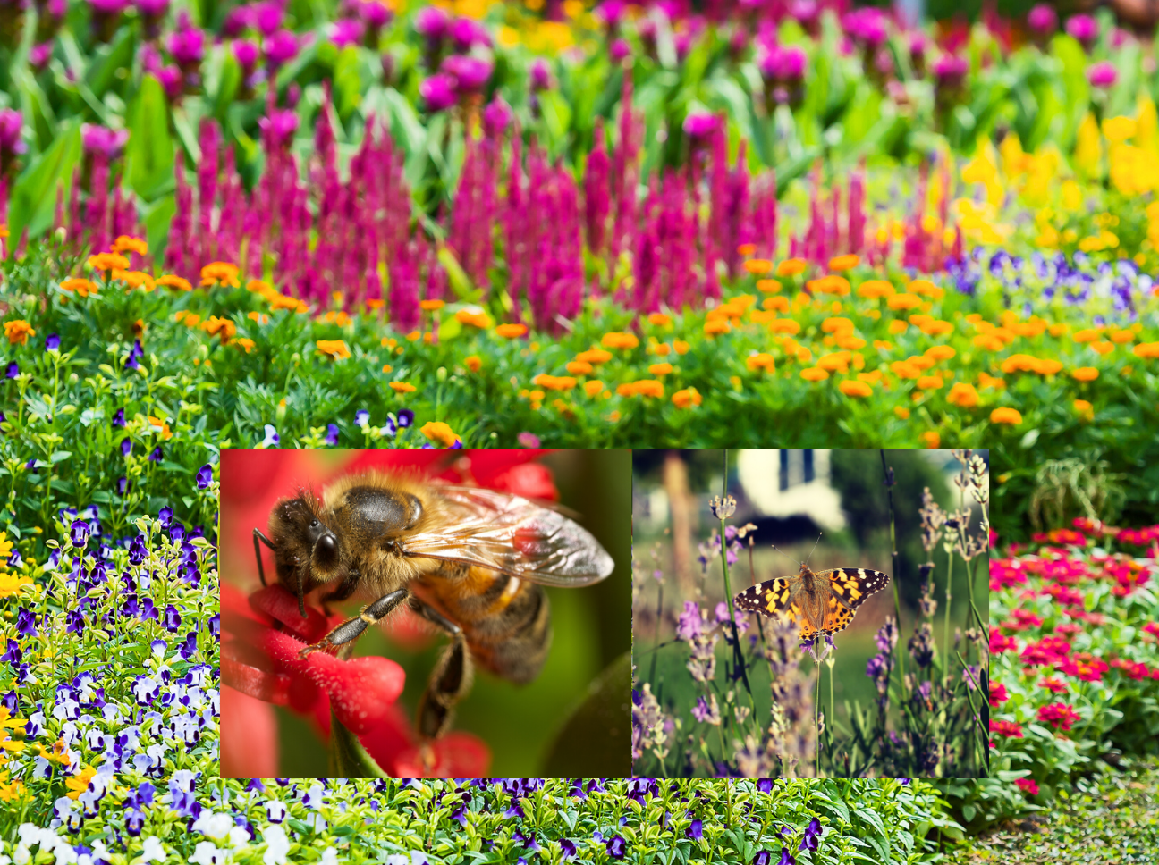 Planning A Pollinator Friendly Garden