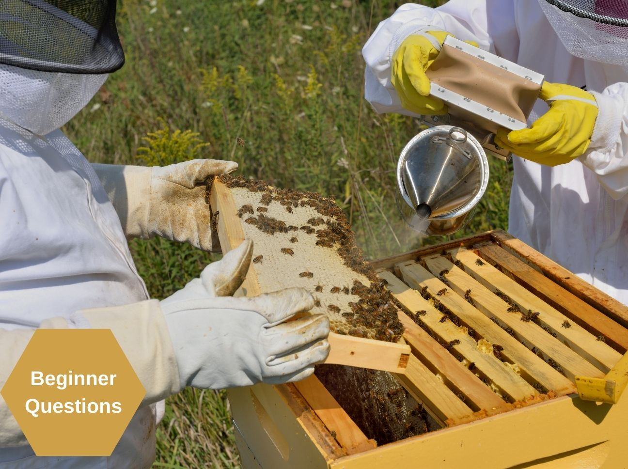 Top Questions Beginner Beekeepers Ask