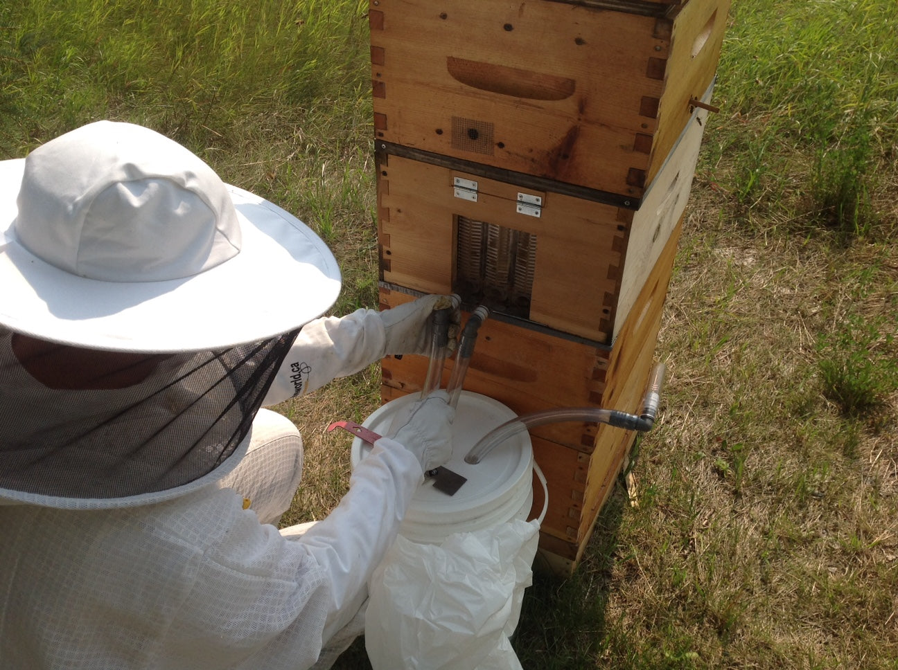 Removing auto-extract and comb honey from your hive