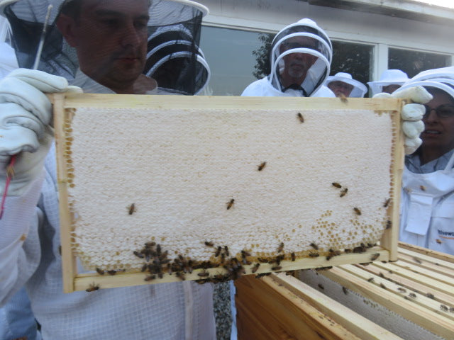 Harvesting Honey- It's the end of the main flow
