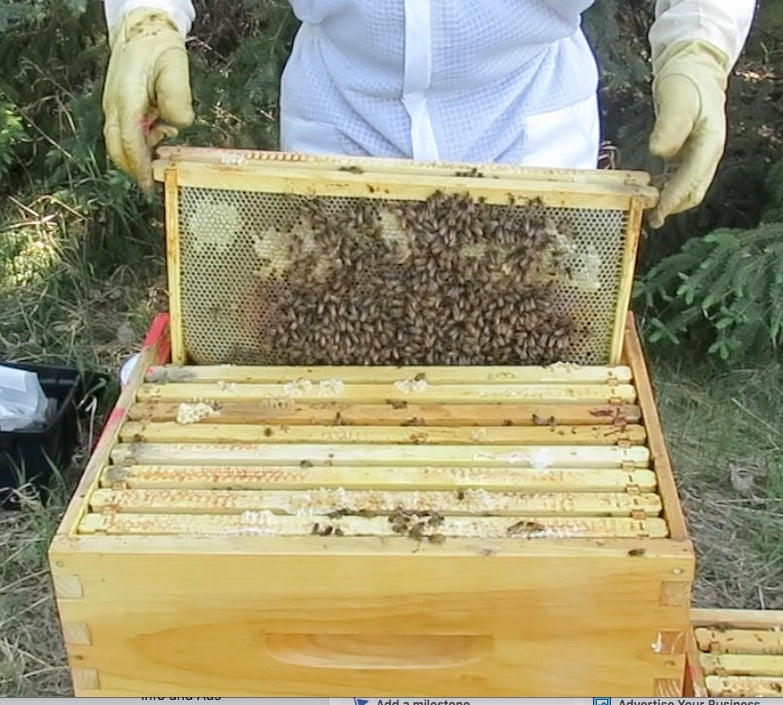 Register online for Alberta beginner beekeeper courses