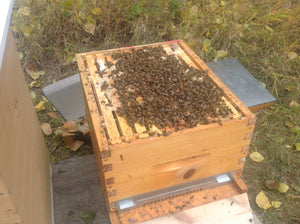 Ensure your hive is in the best shape for winter