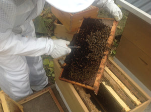 Dealing with a hive that appears unlikely to survive the winter