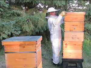 Adding supers for the honey crop while creating your own nucs