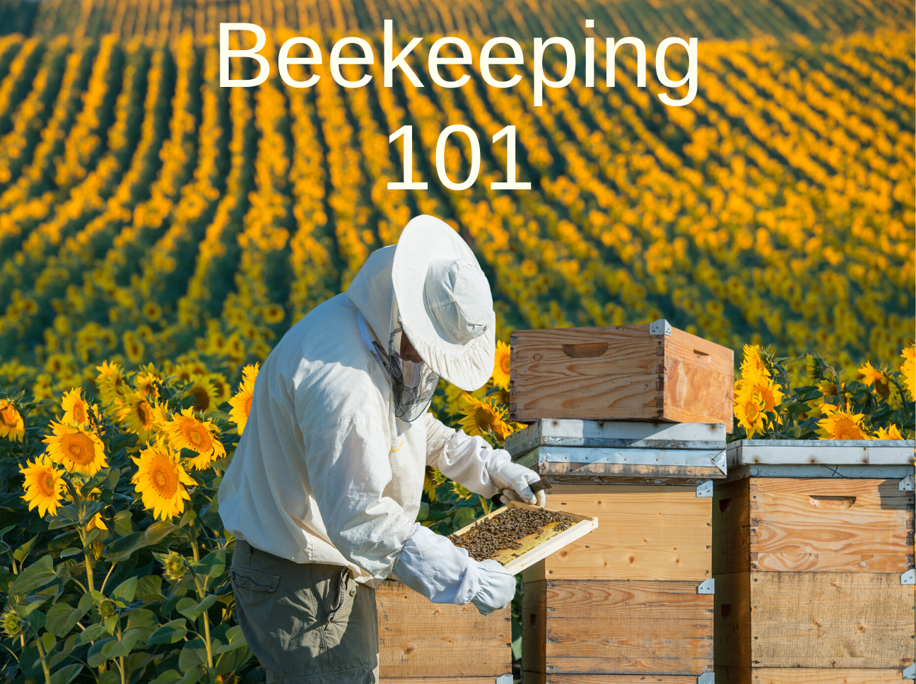 Why You Should Take A Beekeeping Course