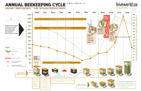 beekeeping calendar graphic