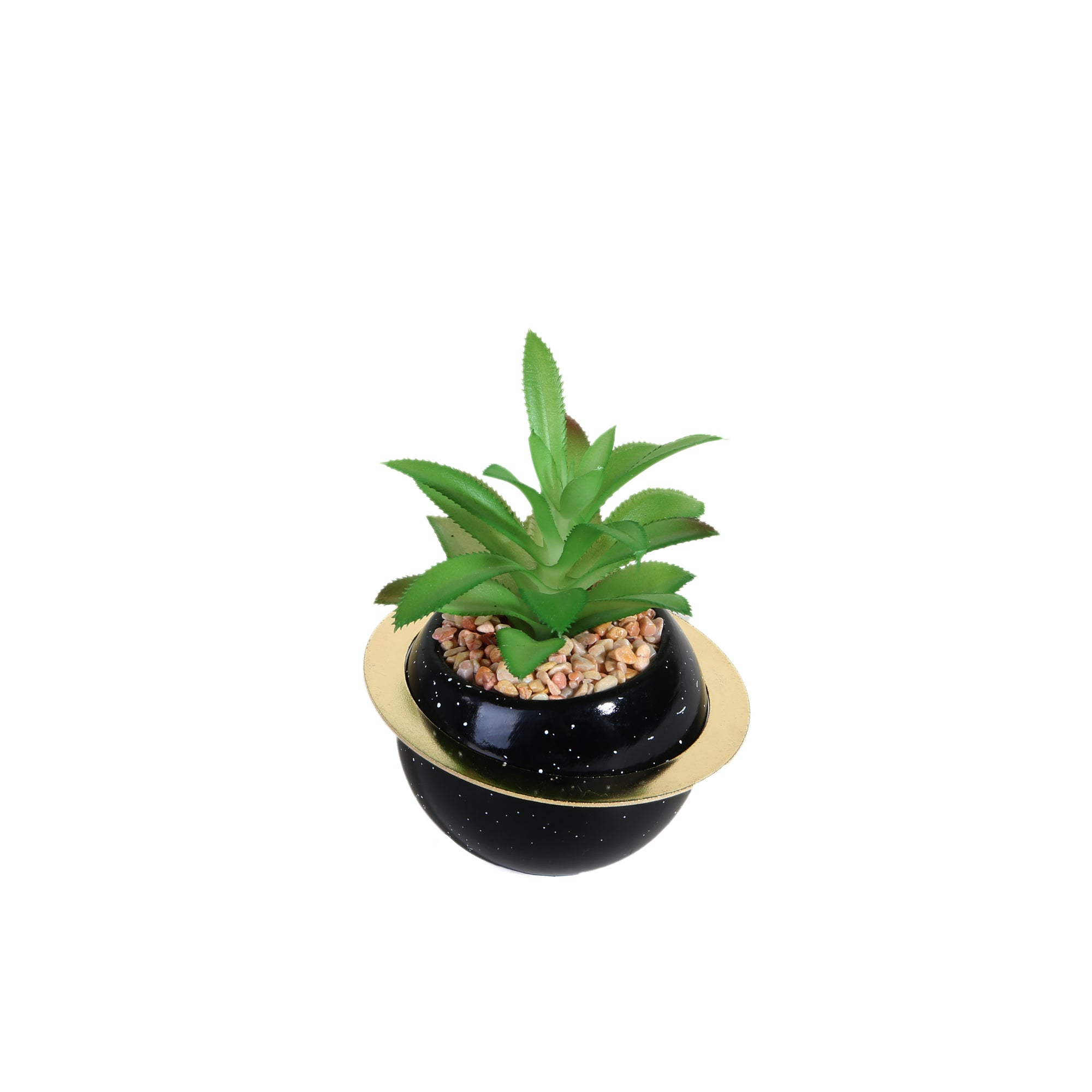 Aloe-Vera Plant with Black Ring Pot