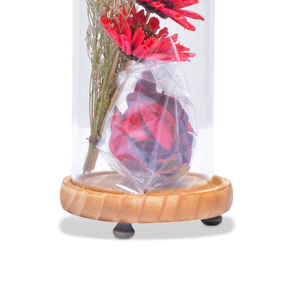 Modern Glass Dome Planter (Red)