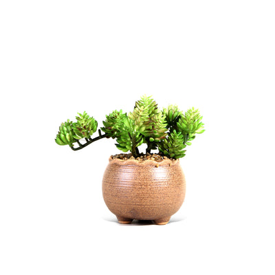 Green Plant with Round Brown Pot