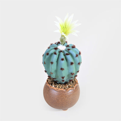Cactus with Round Brown Pot