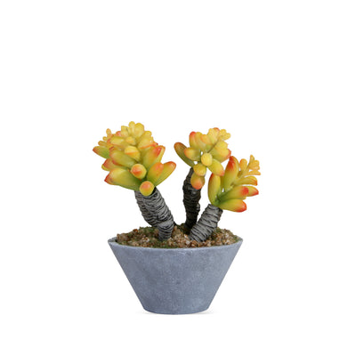 Yellow plant with Gray Pot