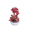 Red Plant with Round Clay Pot