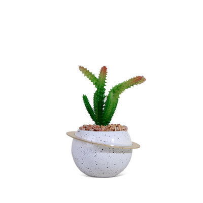 Cactus Plant with White Ring Pot