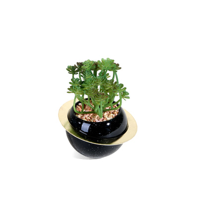 Floral Plant with Black Ring Pot