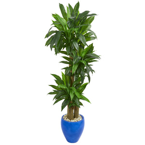 6' Cornstalk Dracaena Artificial Plant in Blue Planter (Real Touch)