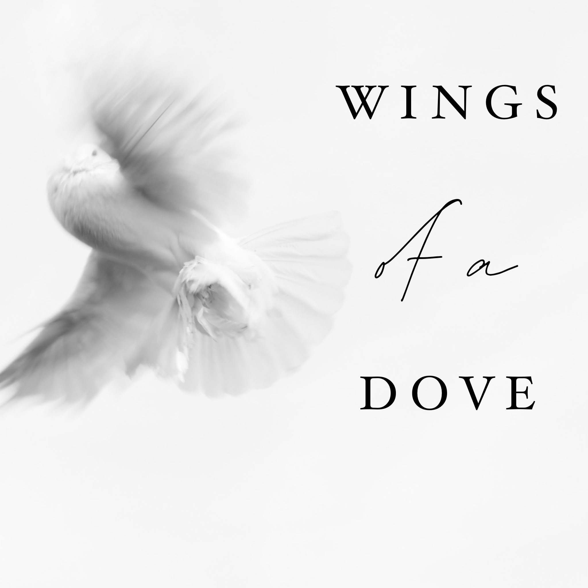 Wings of a Dove - 2/11/20