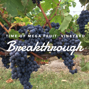 Time of Mega Fruit: Vineyard Breakthrough - 12/21/18