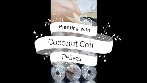 Planting with Coconut Coir Pellets
