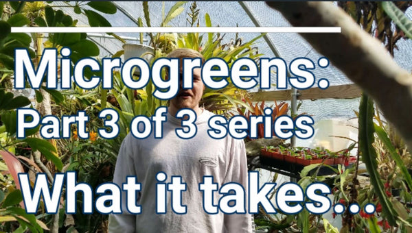 Microgreens: Pat 3 of 3 - What it takes...