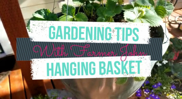 Hanging Basket: Strawberries