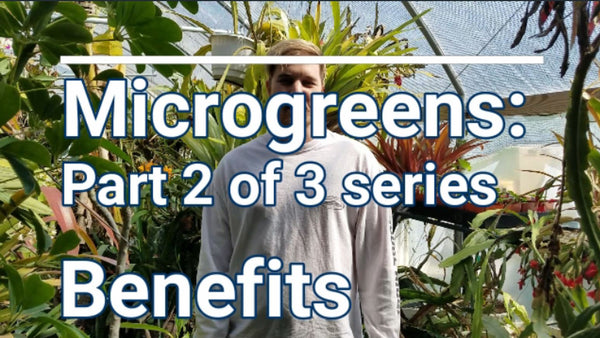 Microgreens: Part 2 of 3 series - Benefits