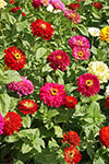 Flower Seed Mix