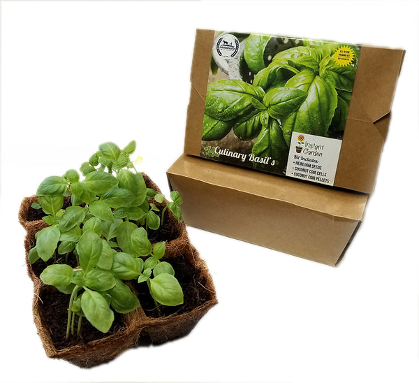 Culinary Basil 6 Pack Seed Starter Kit