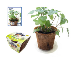 Catnip All-In-One Seed Growing Kit