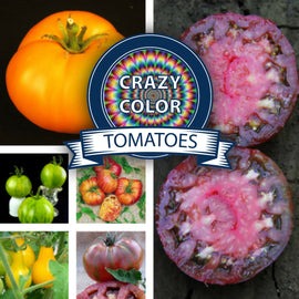 Crazy Color Tomatoes Seed Collection