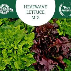 Organic Heatwave Lettuce Seed Mix - 500mg