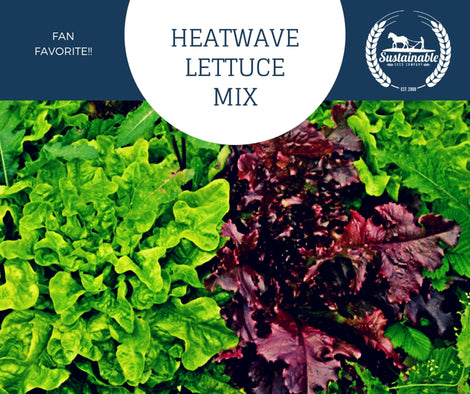 Heatwave Lettuce Seed Mix - 500mg