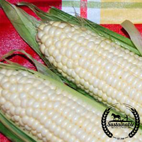 Art Verrell Corn Seed (1 oz) Seeds