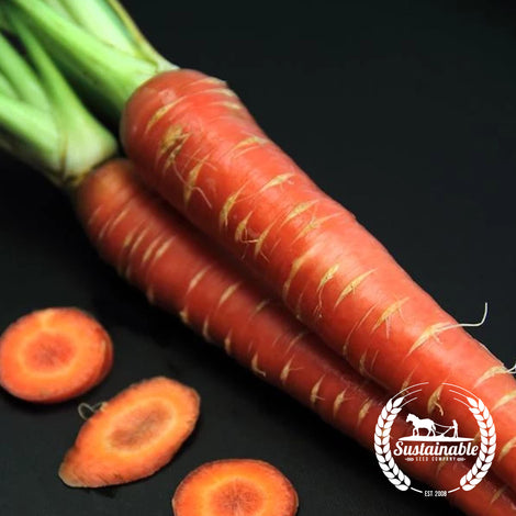 Atomic Red Carrot Seed