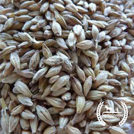 Robust Barley seeds - Non-GMO
