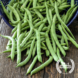 Blue Lake FM1k Pole Bean Seeds