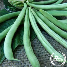 Organic Tendergreen Bush Bean Seeds