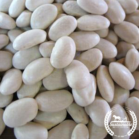 Organic Great Northern Shell Bean Seeds