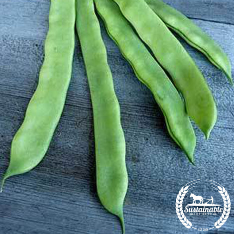 Romano Pole Bean Seeds - Non-GMO