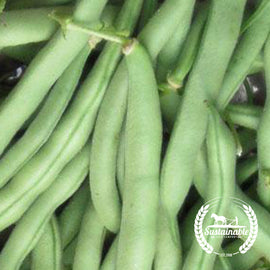 Tenderette Green Bean Garden Seeds