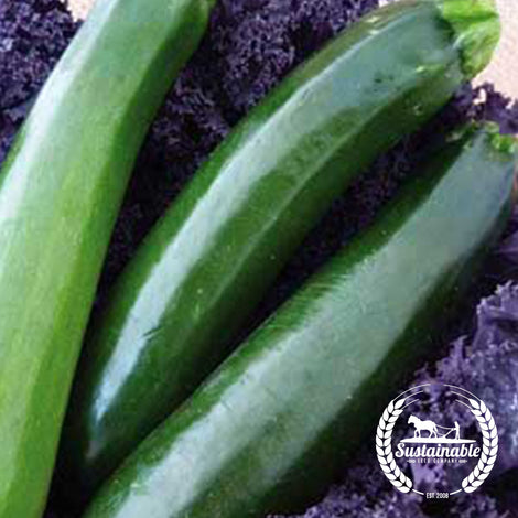 Organic Black Beauty Zucchini Squash Garden Seeds