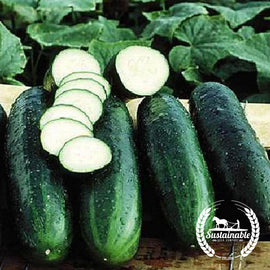Bush Crop Cucumber Seeds