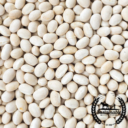 Organic Cannellini Beans Seeds - Non-GMO