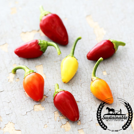 Cascabella Pepper Seeds