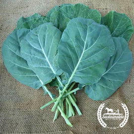 Champion Collard Green Seeds